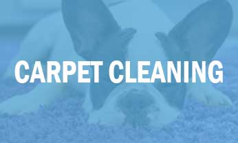 Affordable Carpet Cleaning Destin Niceville Crestview